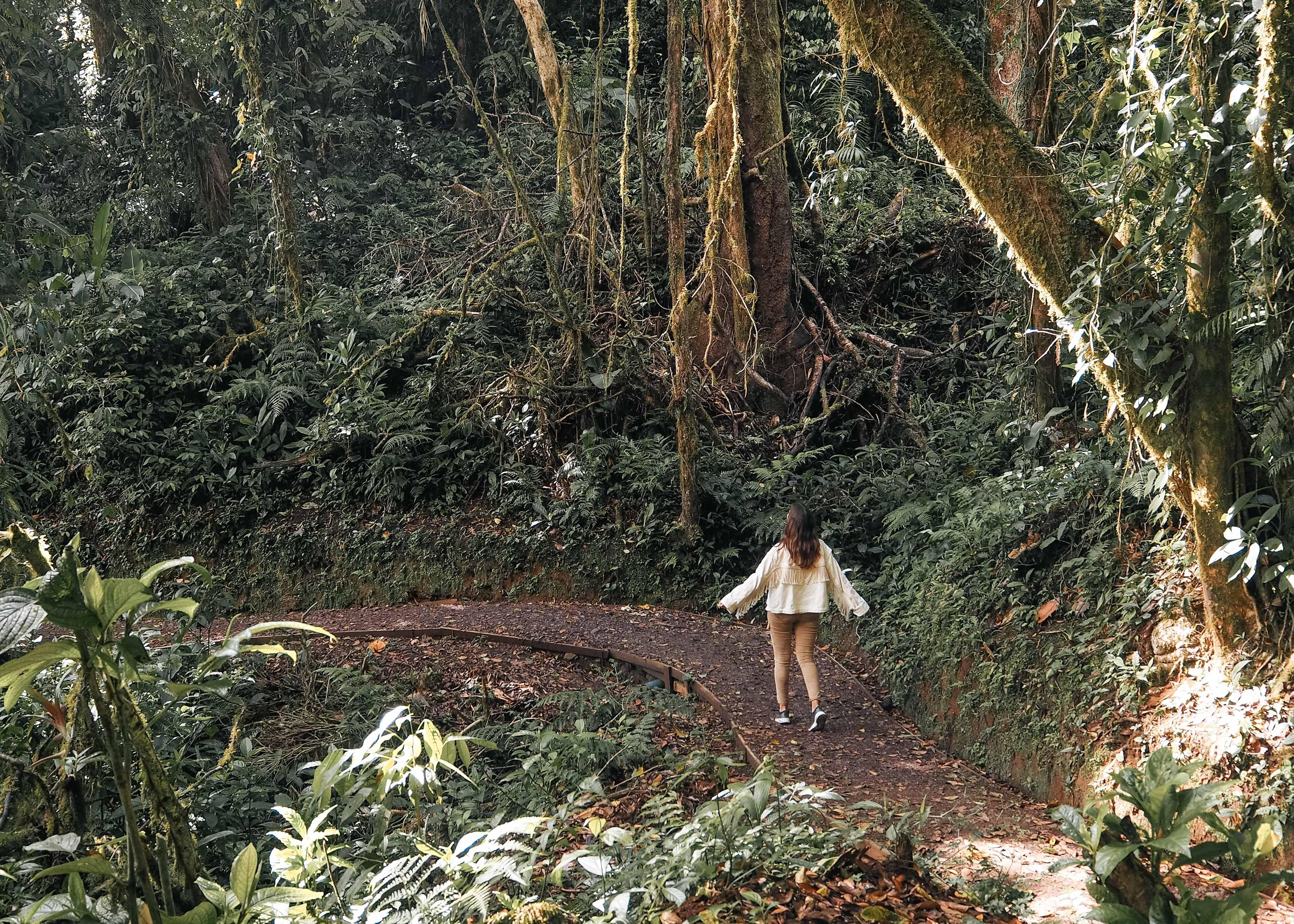 Coste Rica Monte Verde